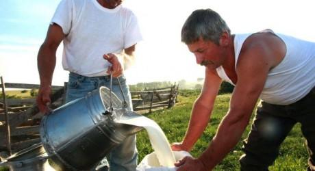 Factorii care influenteaza productia individuala de lapte la vaci